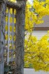 blogpicnature2012March2012neighborhoodspring 085