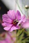 purplesunflowers2011ArtPrizePetoskyTrip 057