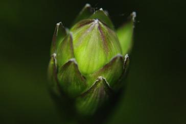 green20122009miscflowersjune2009garden 127