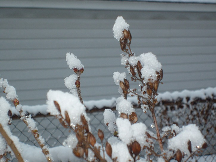 changing seasons2011FirstSnowBreakfastvideo 035