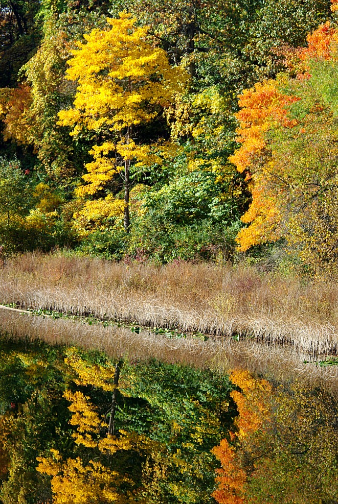 reflection2011FallHiddenLkGrdnsreflect3