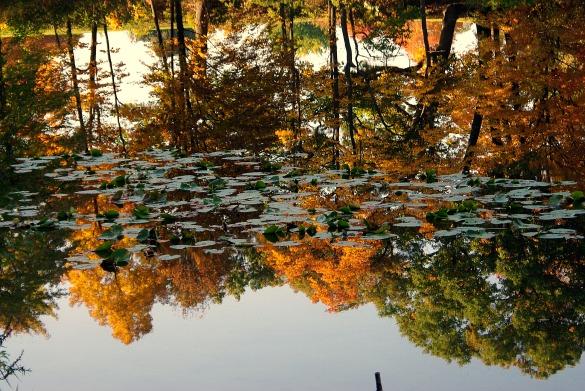 reflection2011FallHiddenLkGrdnsreflections1