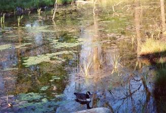 reflectionimg351