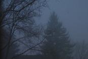 Misty winter morning