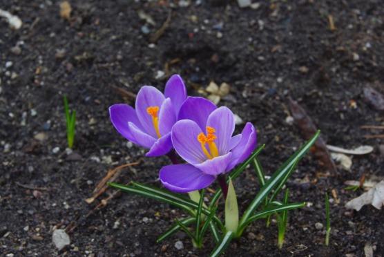2012Marchflowers03142012miscFairlane 101