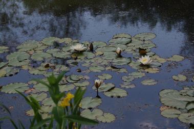 reflections2cranbrook 044