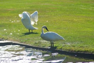 reflections2IMGP0649