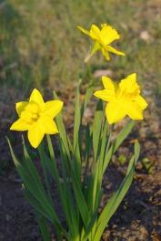 Spring2014AprilMisc 016