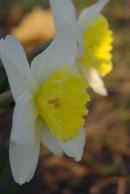 Spring2014AprilMisc 019