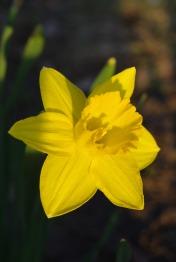 Spring2014AprilMisc 020