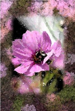 PinkFlowerspink pictureinapicture