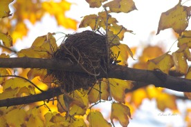 The perfectly constructed bird's nest.