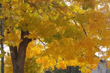 YellowNature2010springflowers2009OCTOBERSTORMDAMAGE 108