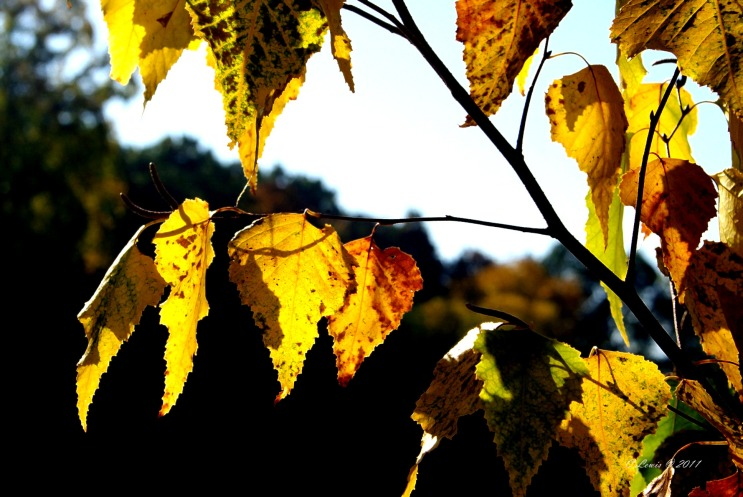 YellowNature2011miscbkup2011fallcontrast