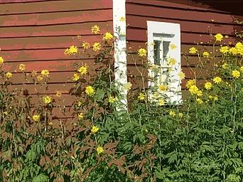 YellowNatureyellowflowerscutout2