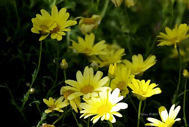 YellowNatureyellowflowerswtrclr2