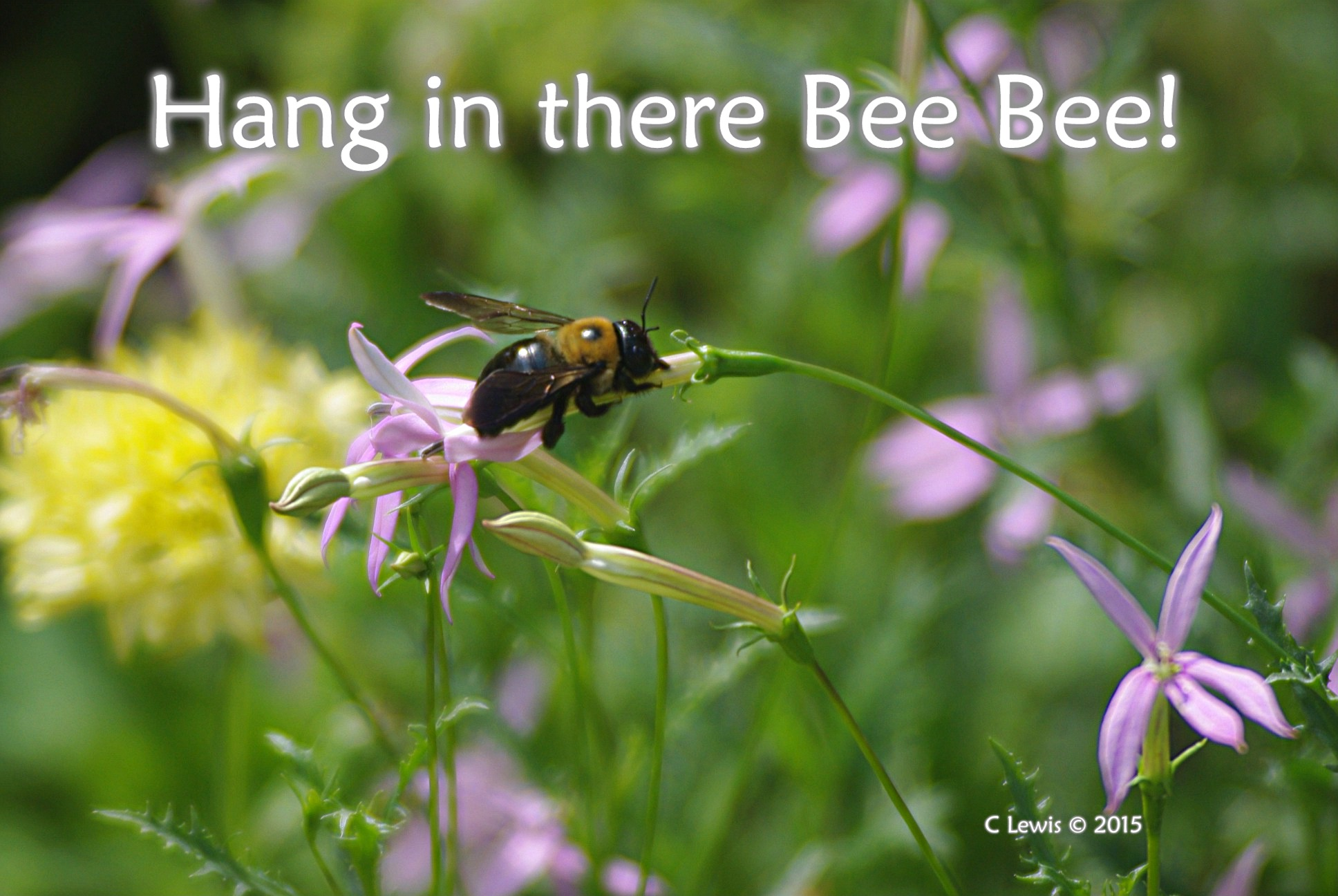 BeeHanginThere