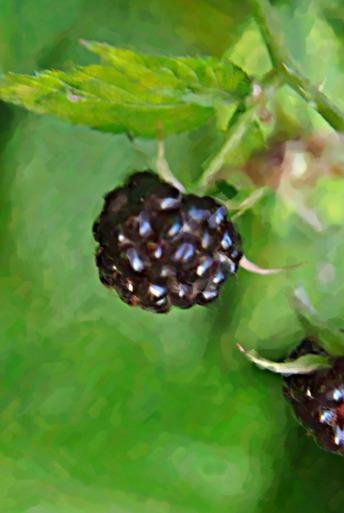 Thirdsblackraspberrypainting