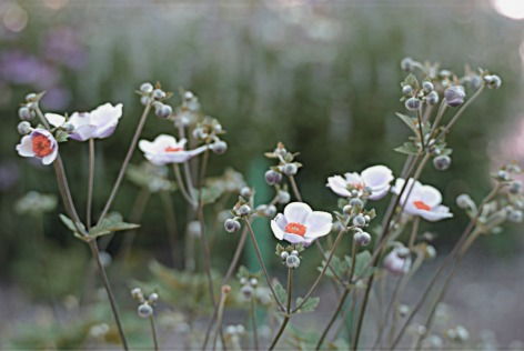 ThirdThirdspalefieldflowersj