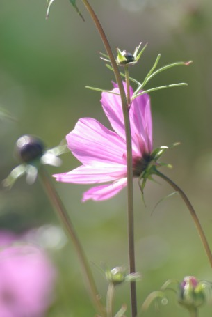 ThirdThirdspurplesunflowers2011ArtPrizePetoskyTrip 054