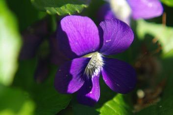 vibrant2010springflowersspring2010flowers 109