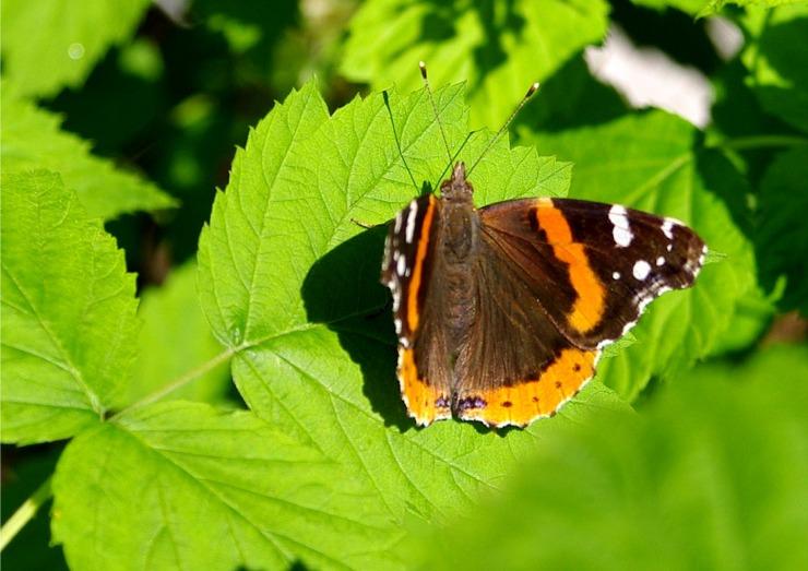 ButterfliesPicture2