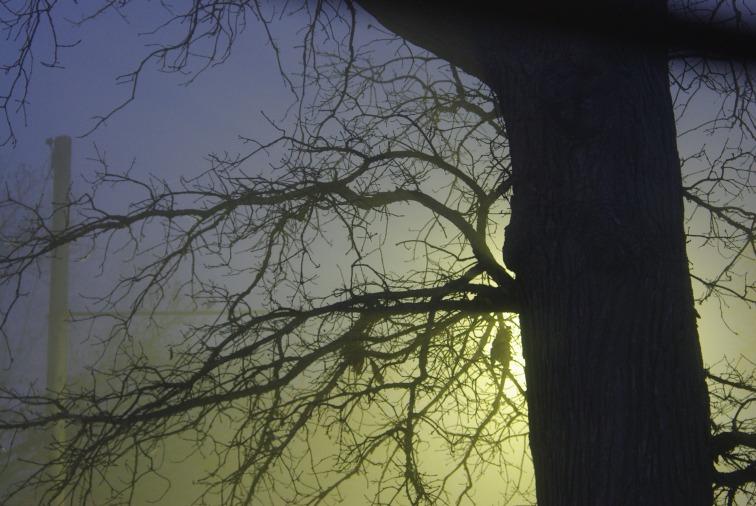 Creepy2012MarchAMFog 011