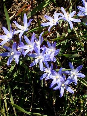 vibrantoptimismSpringShort2013April spring misc 060