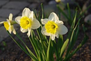 Spring2016Spring2014AprilMisc 010