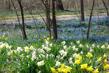 Landscape2April Spring 020
