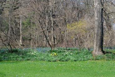 Landscape2April Spring 037