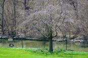 Landscape2April Spring 039