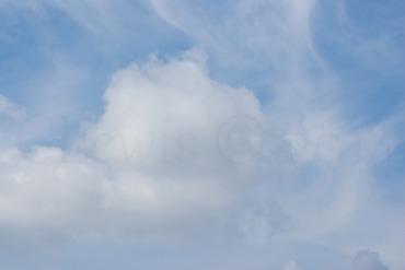 Clouds2009flrsMisc2009octvarioustreedamage 260