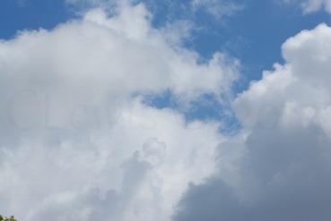 Clouds2009flrsMisccloudsummer2009 024