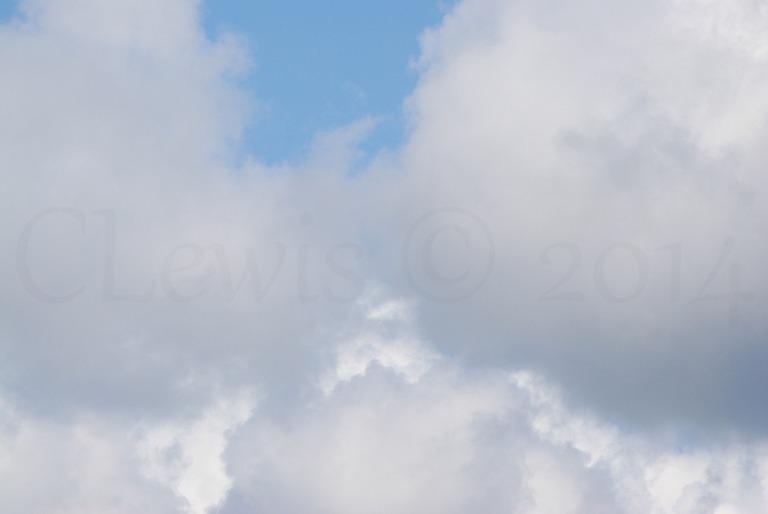 Clouds2009flrsMisccloudsummer2009 025