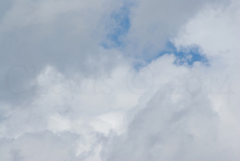 Clouds2009flrsMisccloudsummer2009 039