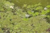 Mill Pond Tecumseh 012