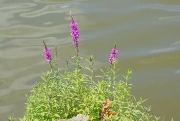 Mill Pond Tecumseh 029