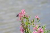 Mill Pond Tecumseh 066