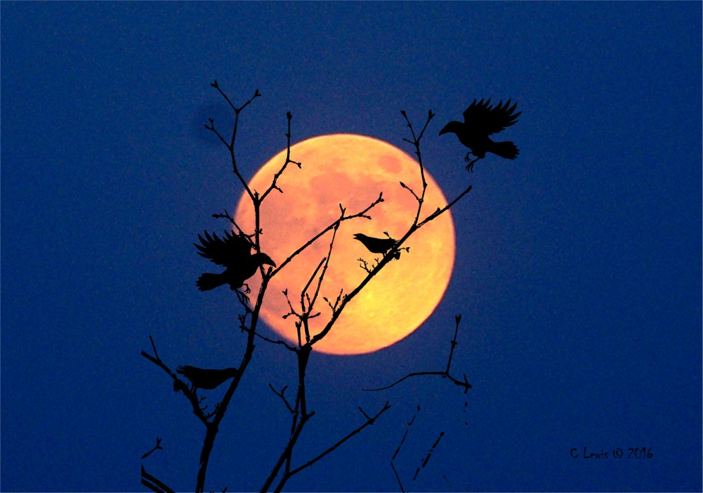 halloween-crows-at-night