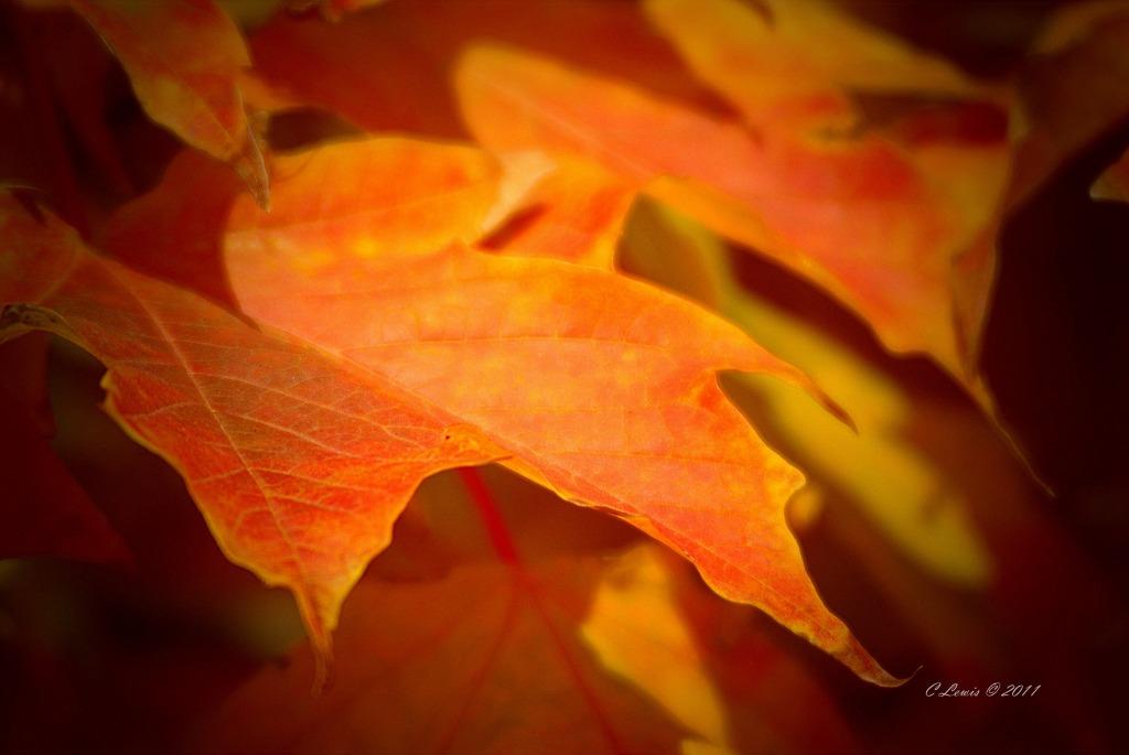 leaves-trustleavesorangelght