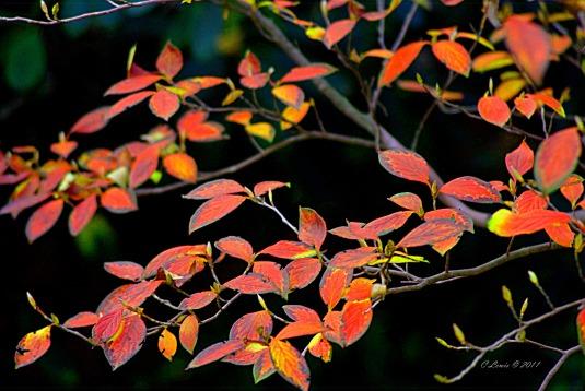 leaves-trustleavesredcontrast3