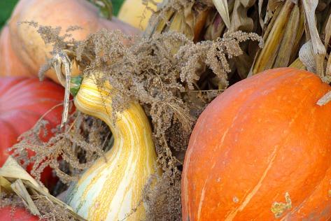 pumpkins-scarecrows2010fallmiscoct2010autumn-053
