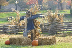 pumpkins-scarecrows2010fallmiscoct2010autumn-096