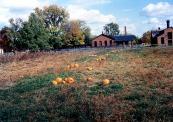 pumpkins-scarecrowsimg732