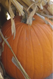 pumpkinsinglej