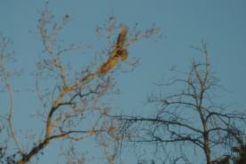 vulturehawks-005