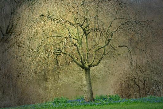 willowspringpntlght