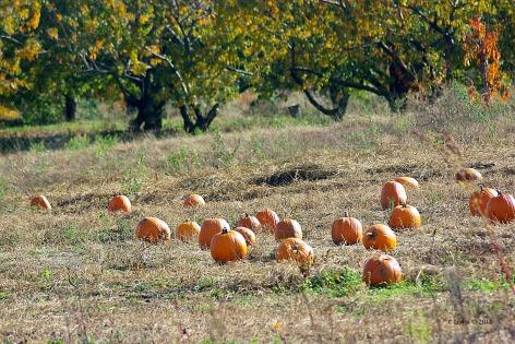 chaosfall-pumpkin-misc2009octoberstormdamage-114