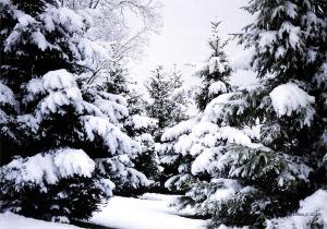 snow-trees-2